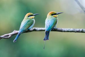 Australasian Birdfair – Sydney